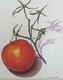 Tomato on the Vine 1