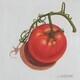 Tomato on the Vine 4