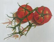 Tomatoes on the Vine 6