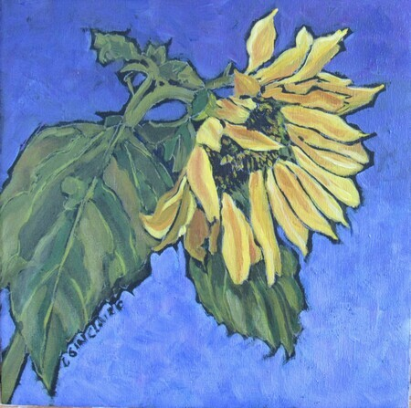 Nearing Sunset - Sunflower Study 3